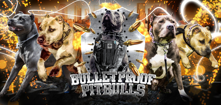 BulletProof Pitbulls
